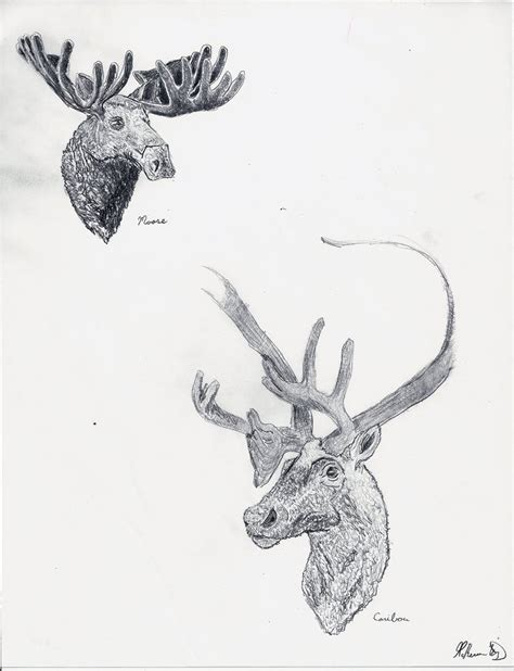 two dot productions more cervidae by twodotproductions on deviantart