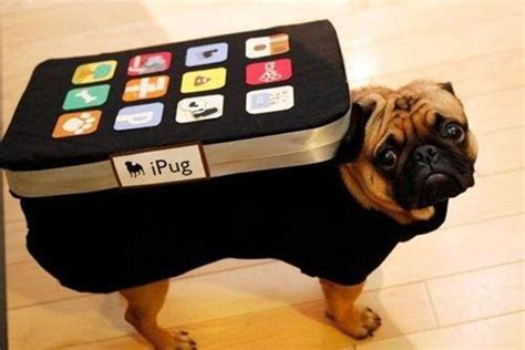 costumes for pugs pug costume ipug iphone