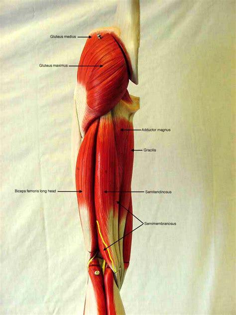 Sd Mesa Anatomy