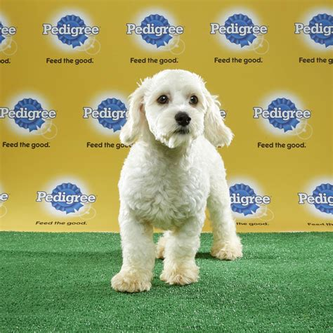 what time is puppy bowl 2017 2017 mvp named in puppy bowl xiii ign