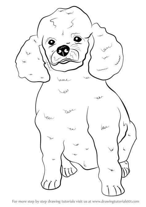 How To Draw A Poodle Step By Step learn how to draw a poodle farm animals step by step