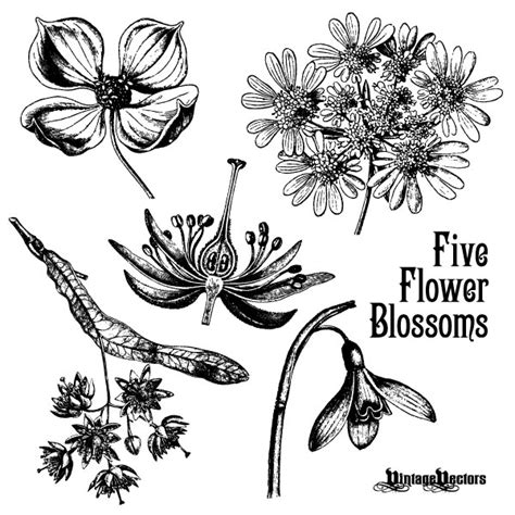 flower tattoo vector free 70 free graphics vintage vector flowers and floral