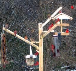 tall bird feeder pole squirrel proof over 8 feet long