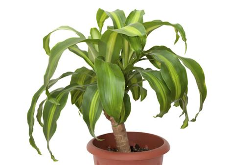 types of tropical house plants 10 household plants that are dangerous to dogs and cats