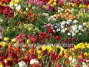 Landscape Pictures Of Flowers ورود جميلة