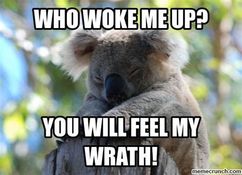 Koala Meme - koala memes google search funny stuff pinterest