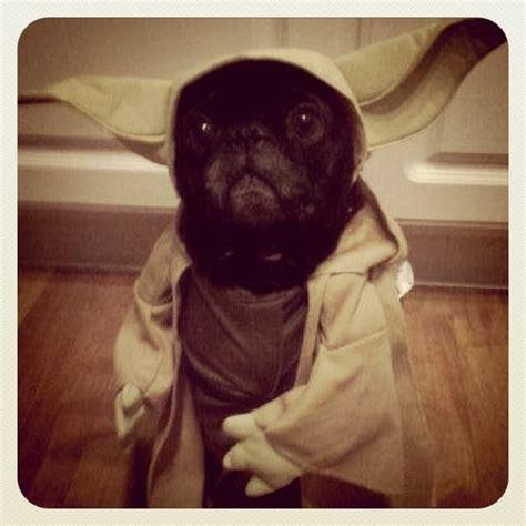 pug yoda costume pug yoda
