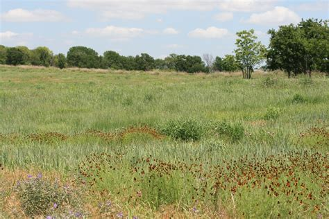 what is a prairie prairies in a changing world state of the prairie conference 2014 ant ecology and