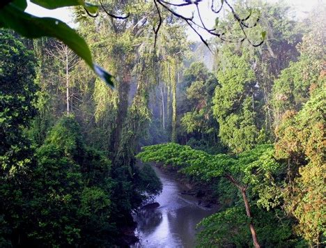 indonesia to launch rainforest scheme funded by norway's