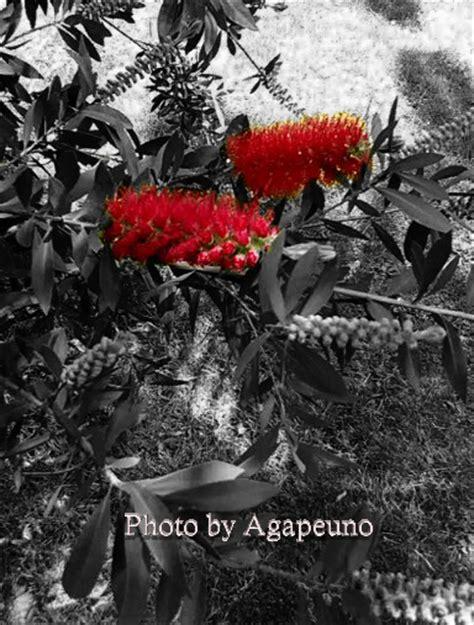 immagini in bianco e nero di fiori fiore colorato su sfondo bianco e nero linkami