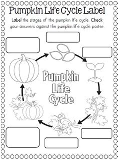 coloring pages of life cycle of pumpkin 1000 images about science life cycles on pinterest life