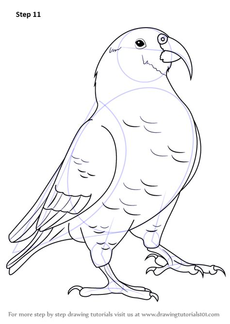 kea coloring book step by step how to draw a kea drawingtutorials101