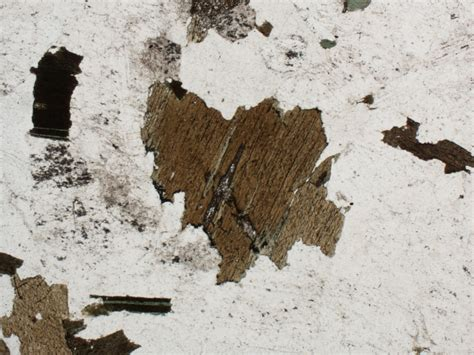 biotite under thin section geology word of the week p is for pleochroism georneys