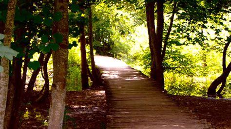 imagenes de paisajes y caminos 9730 camino de madera en medio del bosque efecto