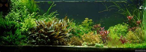 Aquarium 100 Liter 368 by Pflanzenbecken Soil Oder Sand Substrate Seite