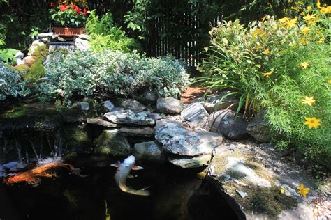backyard koi ponds  water gardens   growing trend