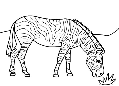 coloring pages animals zebra 15 kids coloring pages zebra print color craft
