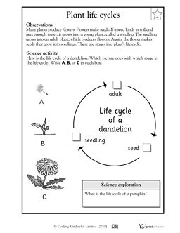 biography lesson plan for 2nd grade plant life cycle plant life cycle pictures for second grade naked celebs