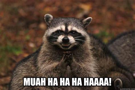 Ha Ha Meme - muah ha ha ha haaaa evil plotting raccoon quickmeme