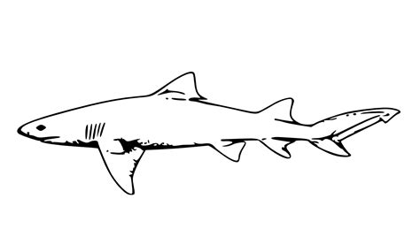 sand shark coloring page tiger shark coloring pages for grig3 org