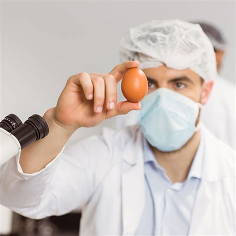 chicken research paper don t be chicken choosing poultry science as a career