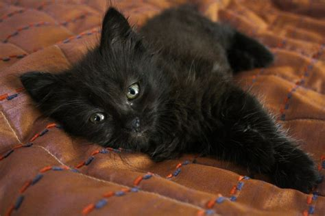 how to find a black cat in a room the psychology of intuition influence decision and trust books cutest black kitten teh