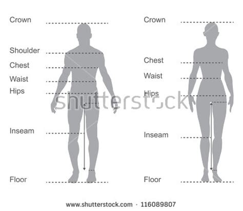 design by humans size guide human body parts stock photos images pictures