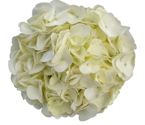 natural white hydrangea flowers and fillers flowers