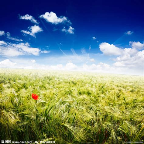 beautiful nature images 麦田风光高清图片摄影图 自然风景 自然景观 摄影图库 昵图网nipic