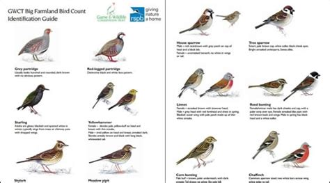 farmland bird id guide free guide game and wildlife