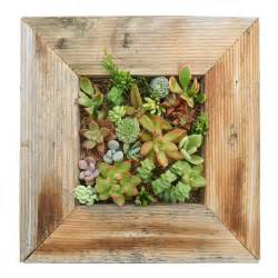 Planter For Succulents Succulent Living Wall Planter Kit Vertical Container