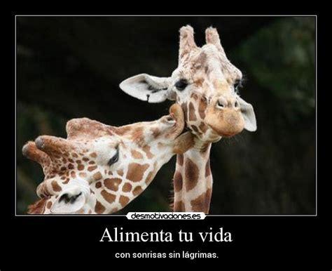 imagenes comicas de jirafas imagenes de jirafas con frases imagui
