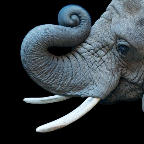 South Africa Search Elephant National Geographic