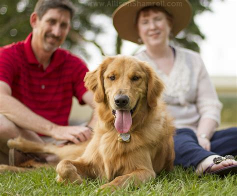 golden retriever owners my last session in florida monty the golden retriever san diego pet photographer