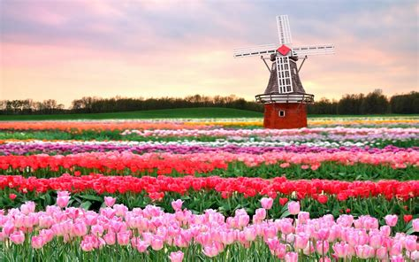 netherlands tulip fields keukenhof a haven of tulips in amsterdam the netherlands