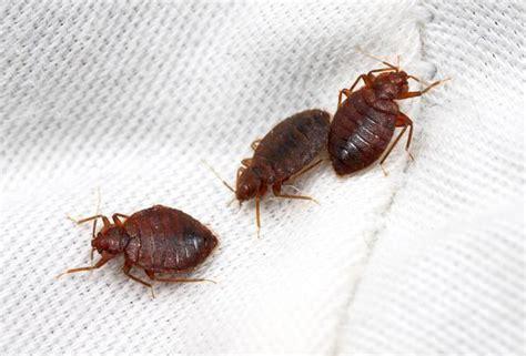 de for bed bugs nu lasati plosnitele bed bugs sa va streseze blog