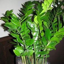 images  tanaman indoor  pinterest indoor