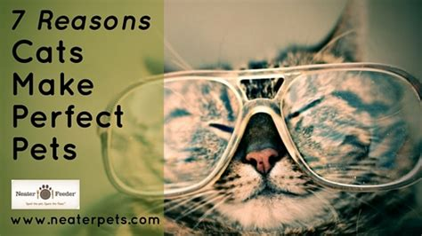 7 Reasons To A Pet by 7 Reasons A Cat Makes The Purr Fect Pet Neater Feeder
