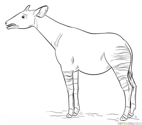 How To Draw An Okapi Step By Step Drawing Tutorials Okapi Coloring Pages
