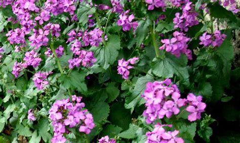 piante ornamentali da giardino piante ornamentali da giardino homeimg it