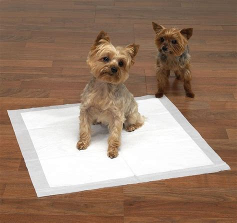 my dog is peeing all over the house puppy dog pad pee potty case of 150 irregular house training pads 23 x 36 inch ebay