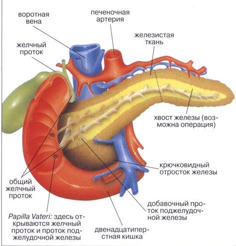 схема работы поджелудочной железы