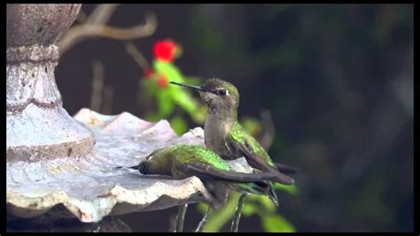 water fountains for hummingbirds