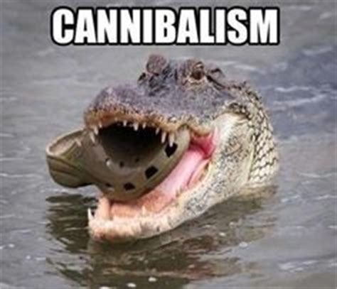 Alligator Meme - favorite memes on pinterest memes animal memes and