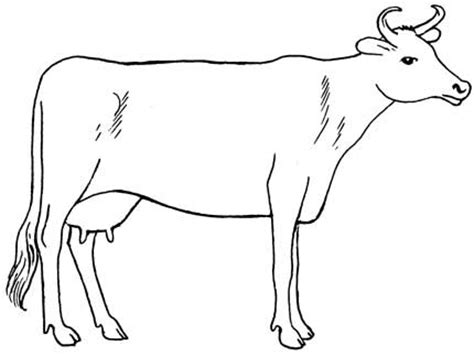how to a cow how to draw cow