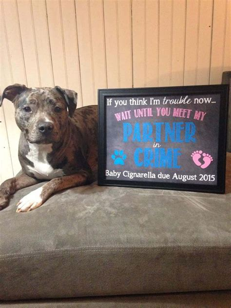 pregnancy announcements with dogs 25 best ideas about pregnancy announcement on baby announcements