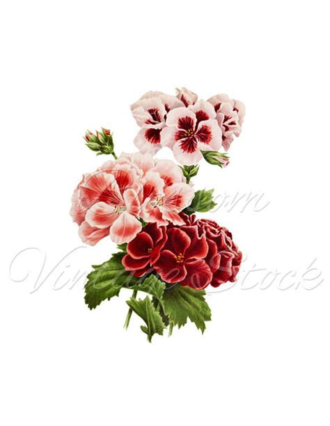 printable wall art flowers 1118 best antique illustration for print and digital art