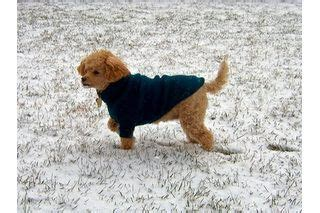 home remedies for spots on dogs spotted home remedies and a on