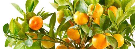 Faire Pousser Legumes Interieur by Cultiver Des Plantes D Int 233 Rieur Avec Des Restes De Fruits