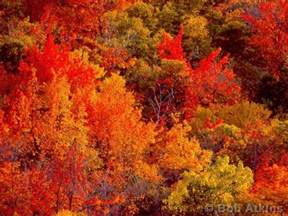 new fall colors best new fall family vacation resorts family